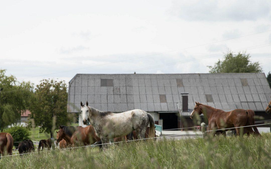 Eindrücke vom Reiterhof Mösl-Haregg